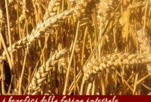 La farina integrale di frumento: valori nutrizionali, ricette e consigli d'acquisto