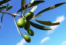 """i """"magici"""" effetti dell'olio extravergine di oliva"""