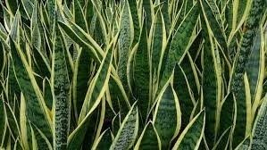 le piante: ruolo attivo per migliorare l'ambiente