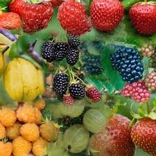 Succo di…frutta?