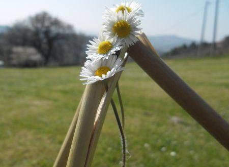 Marche: San Bartolo e dintorni in camper