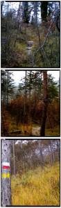 lungo il sentiero giallo del parco pineta