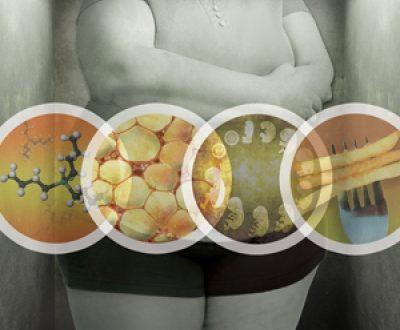 Obesogeni: sostanze chimiche che possono farci diventare più grassi.
