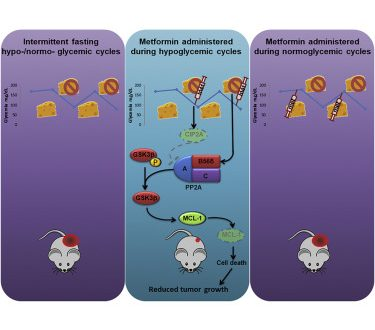 """Tumori: una cura possibile, facendo """"morire di fame"""" le cellule malate?"""